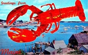 live lobster delivery