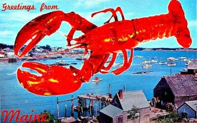 live lobster delivery