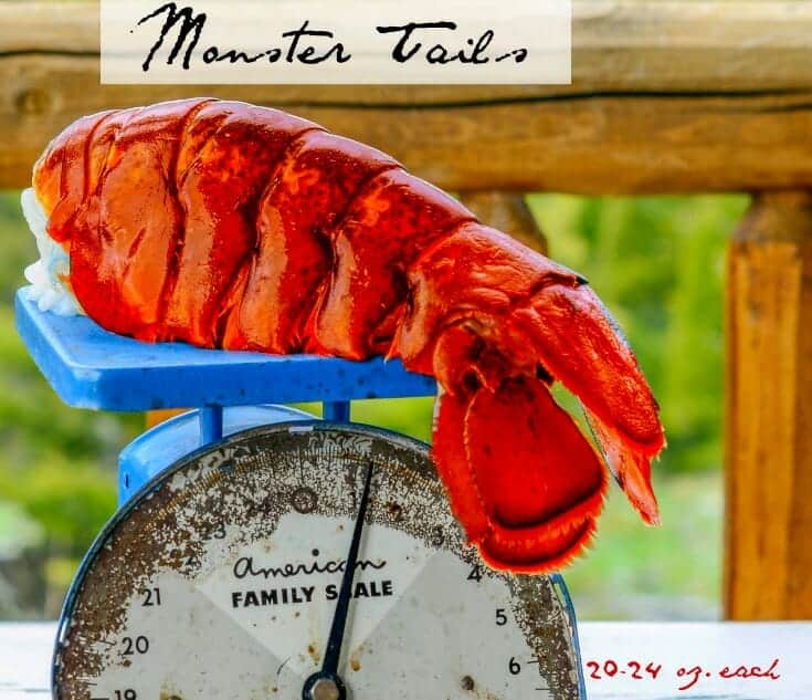 Buy Big Lobster Tails