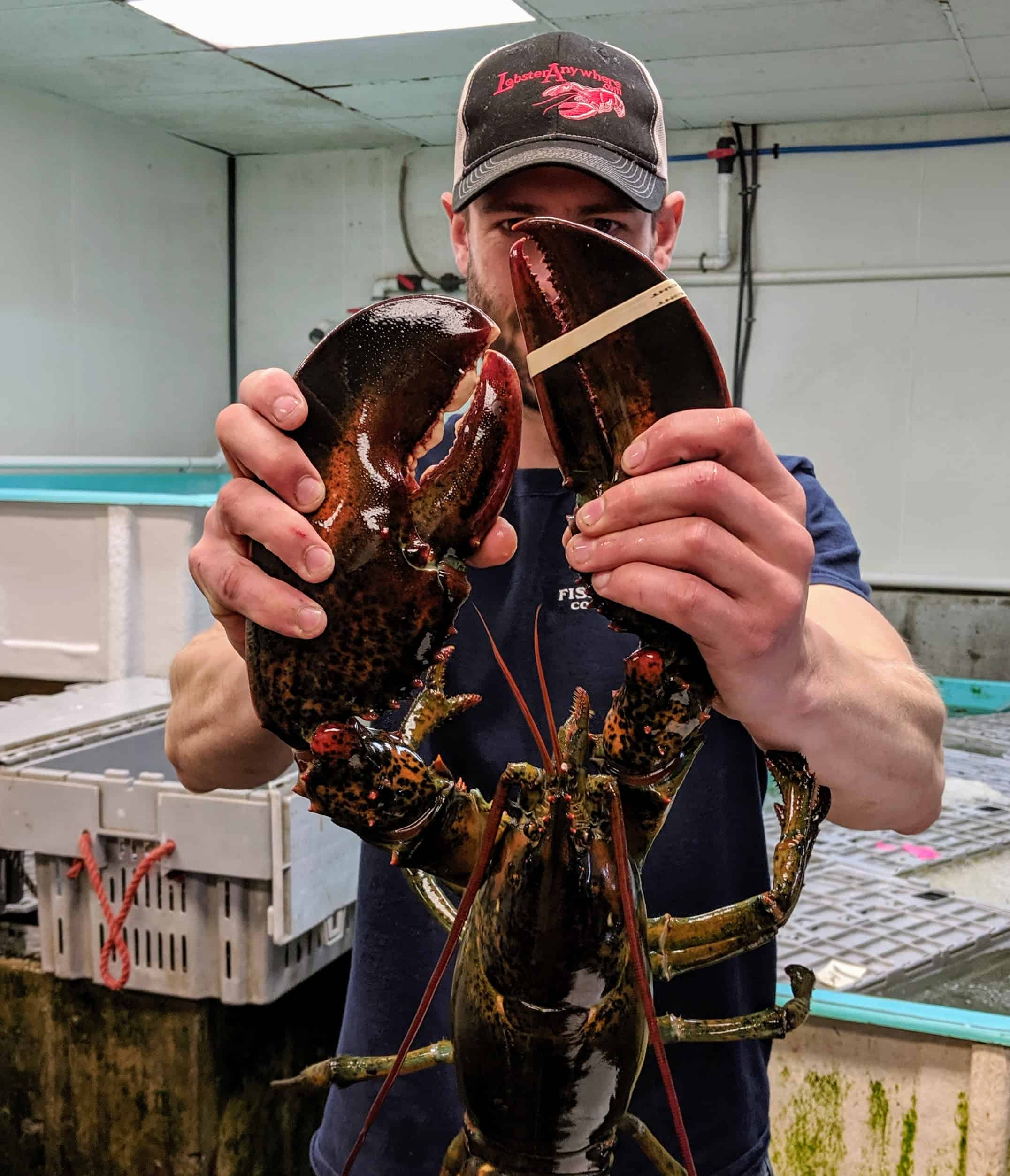 Lobster Delivery Father's Day