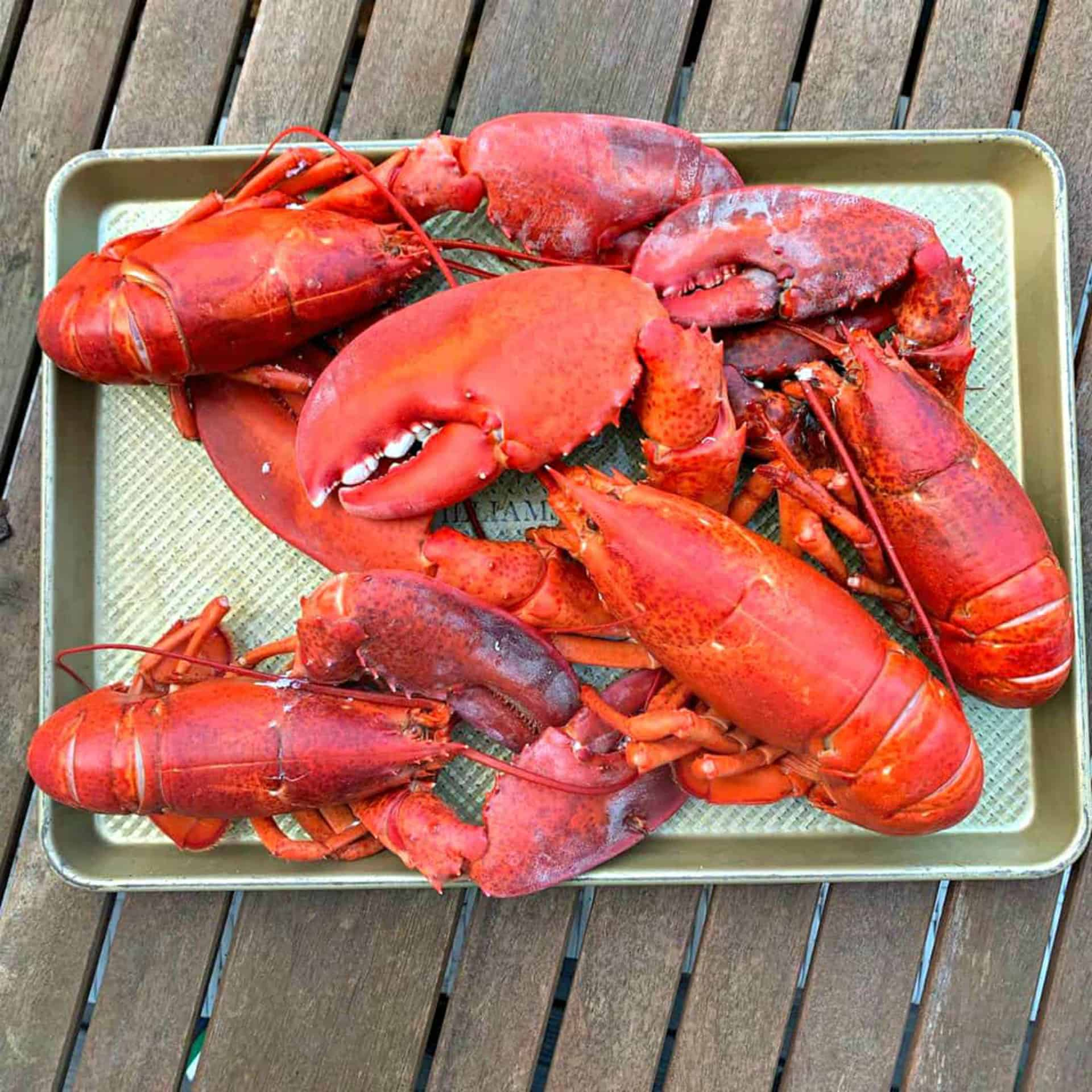 Maine Lobster for National Lobster Day