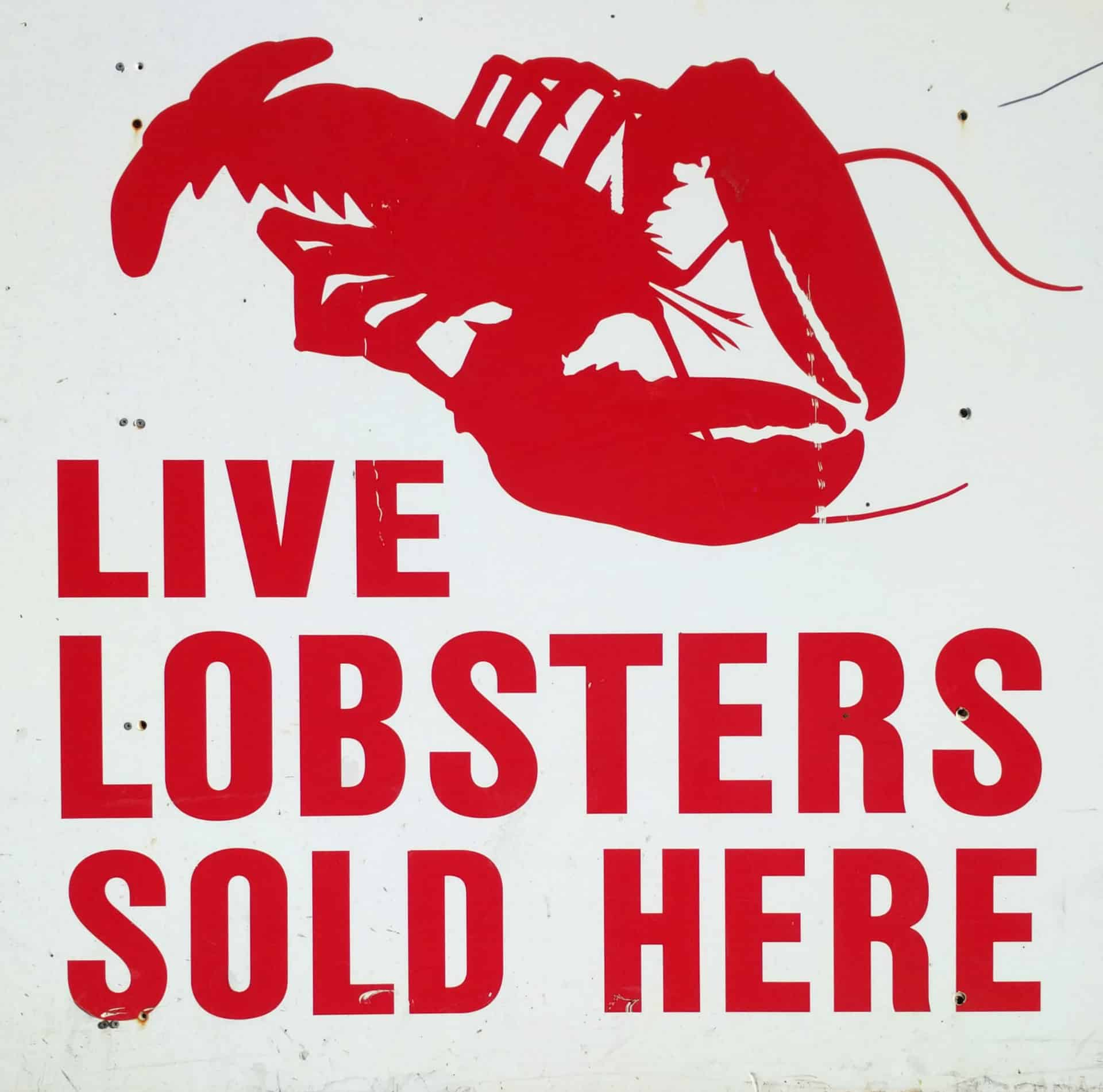 Live Lobsters Sold Here