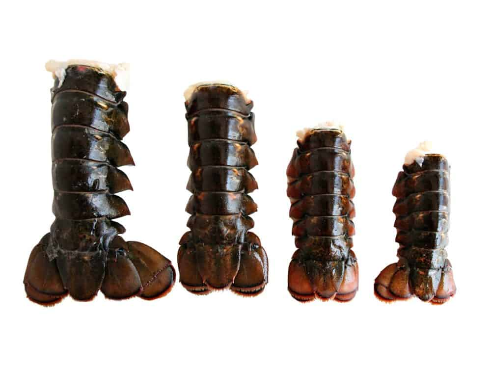 Fresh Lobster Tails