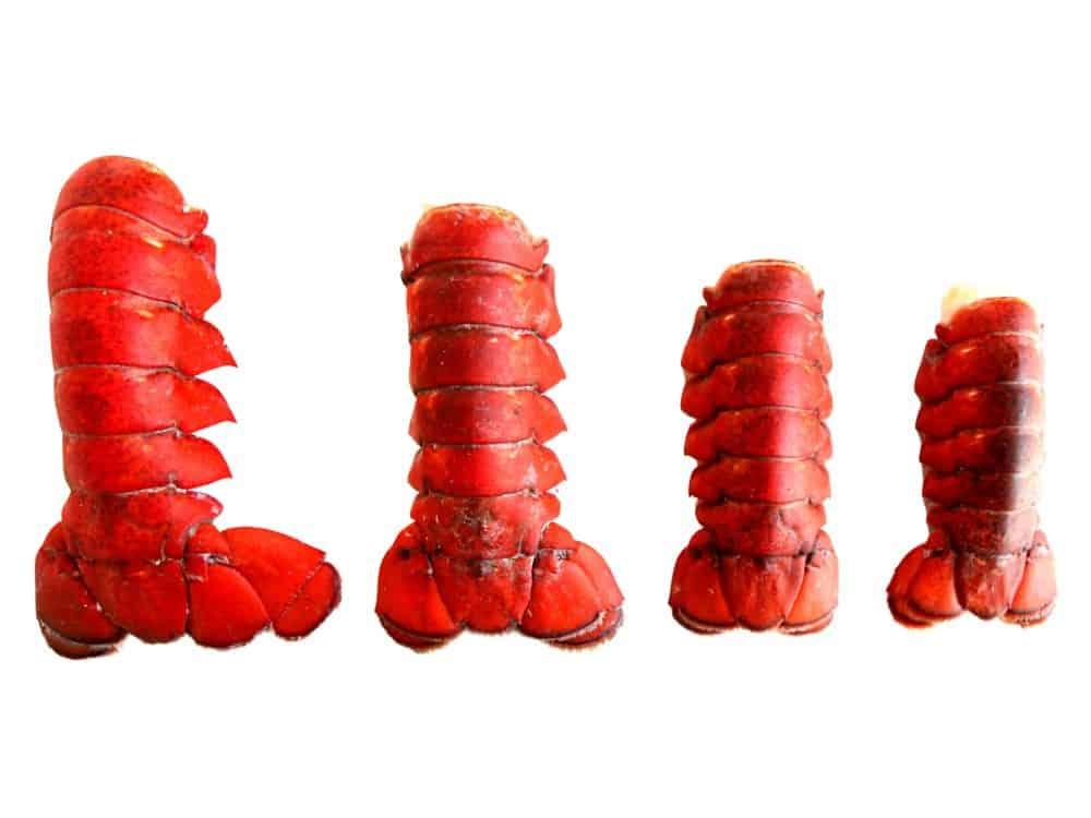 Frozen Lobster Tails