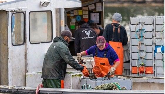 Lobster Men Picking Lobsters in a Boat