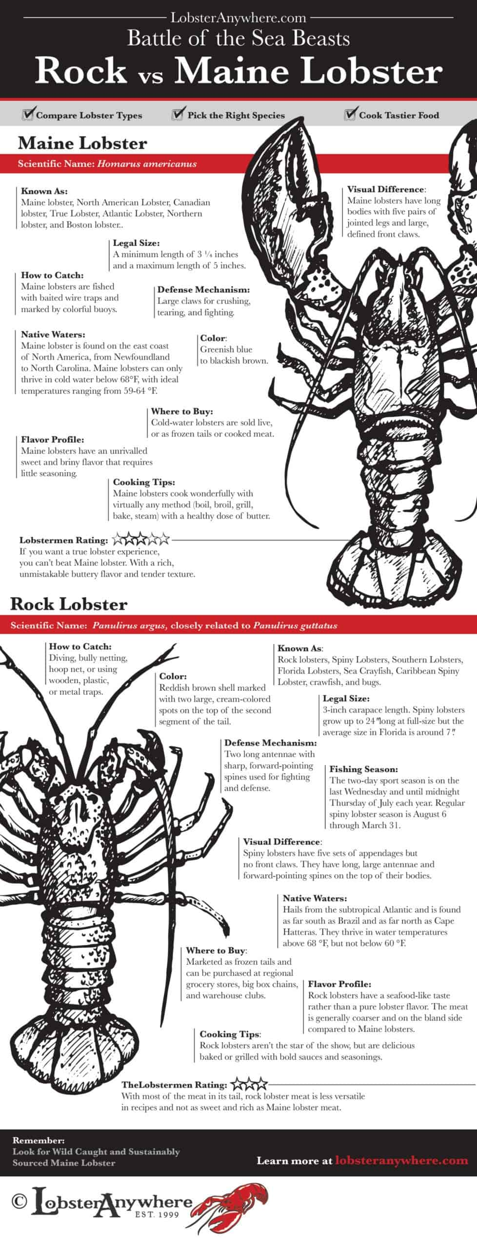 Difference Rock lobster versus Maine lobster